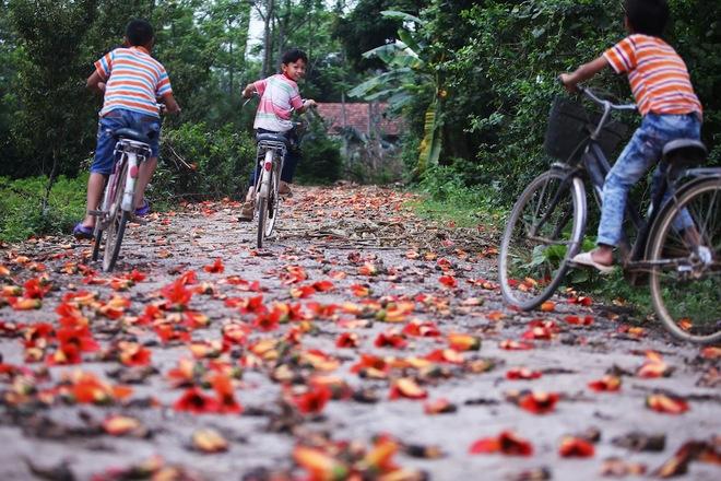 Bombax ceiba is a special kind of flower in Vietnam